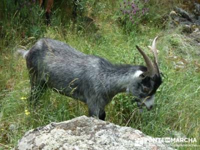 Parque Nacional Monfragüe - Reserva Natural Garganta de los Infiernos-Jerte;viajes organizados fin